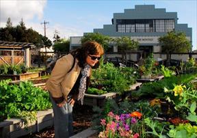 public enjoying garden